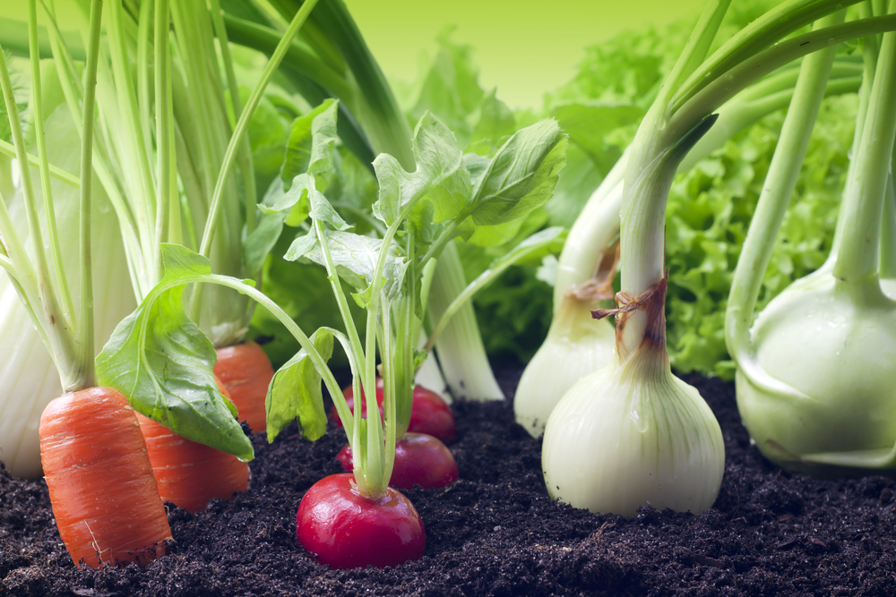 What-to-Plant-in-Your-Vegetable-Garden-in-March